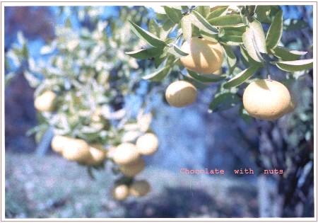 03 柑橘1.jpg