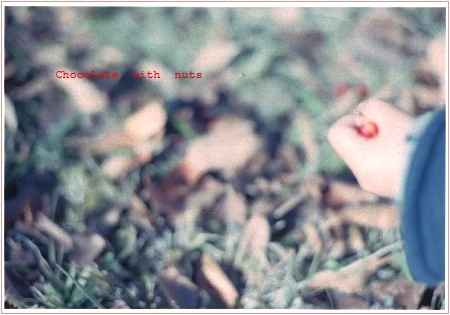 03 赤い実1.jpg
