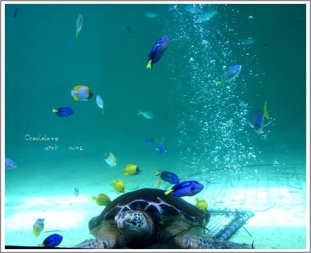 04 ウミガメに魚.jpg