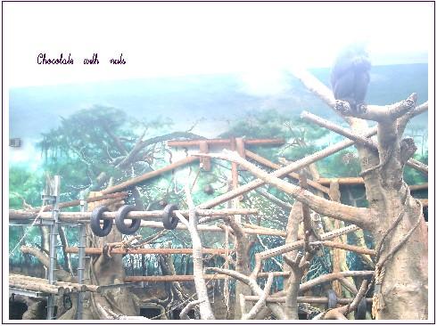07 チンパンジー.jpg