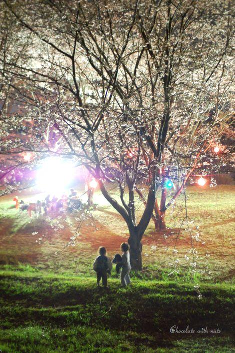 08 夜桜の下で.jpg