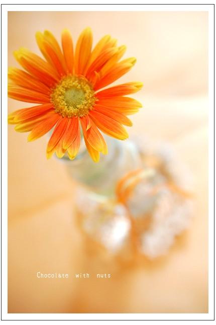 13 ガーベラと花瓶.jpg