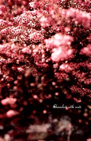 18 1P ピンクの花 ミニ.jpg