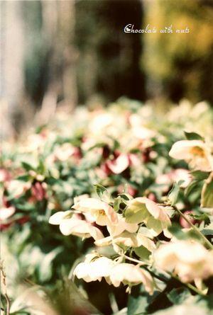 18 1P 白い花 ミニ.jpg