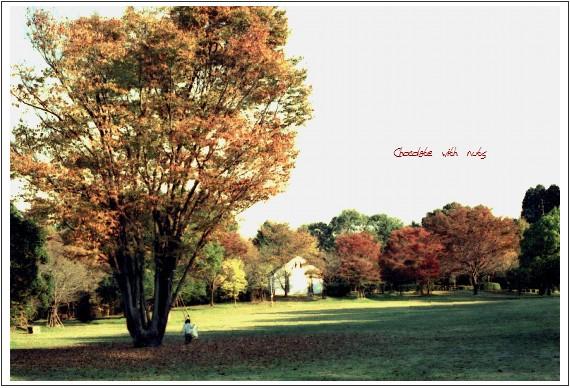 21 木の紅葉.jpg