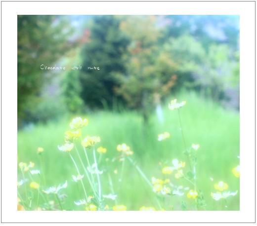 21 野の花.jpg