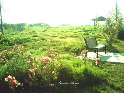 29 ピンクの花とベンチ.jpg