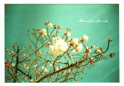 06 ポパカメ 春の花.jpg