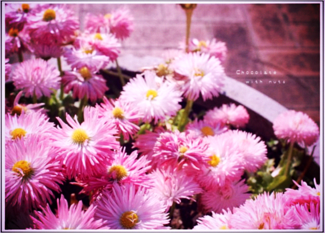 20 ピンクの花.jpg_effected.png