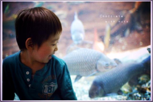 20 地味な魚.jpg_effected.png