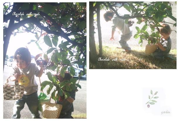 20 木の実.jpg
