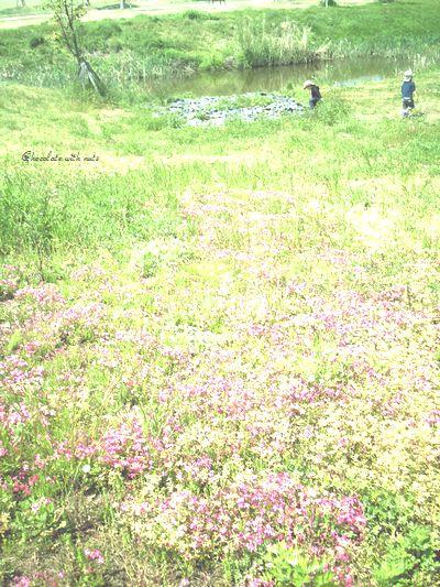 29 池とお花畑.jpg
